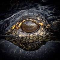 Eye of the Gator | Social Profile
