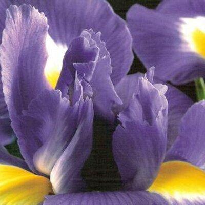 Iris | Social Profile