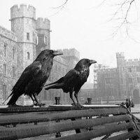 Raven Rocks | Social Profile