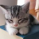 癒しの猫動画