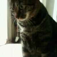 猫塚やすあき | Social Profile