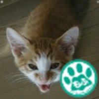 のり兄 | Social Profile