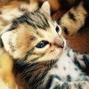 猫好き@里親になろう
