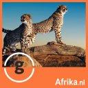 Photo of AfrikaNL's Twitter profile avatar