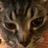 blackcat_leesan