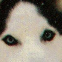 depuppy3 | Social Profile