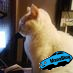 猫小次郎 Social Profile