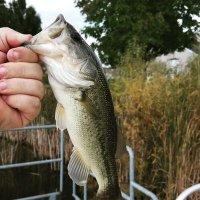 @R_B_Fishing