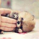 動物の可愛いしぐさ