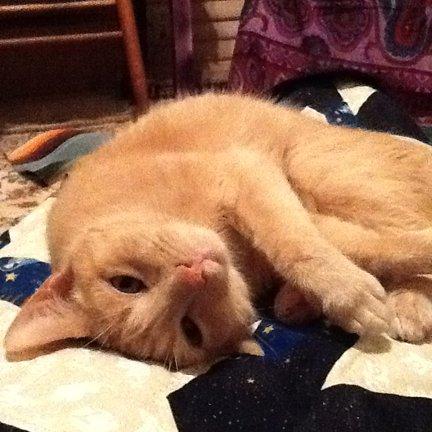 Cheshire Kitten Social Profile