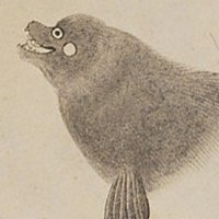 K. Nishiyama | Social Profile