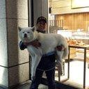 秋田犬   白虎犬舎