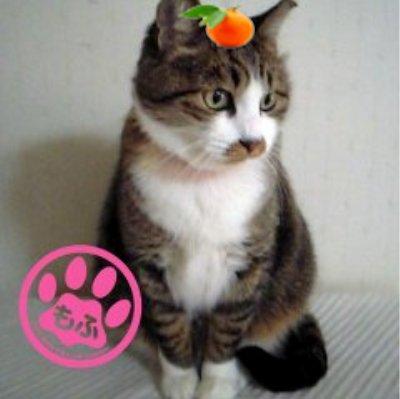 まさにゃん/Masaya Kimoto Social Profile