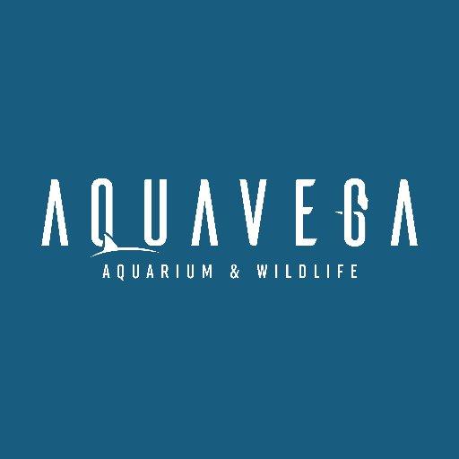 Aqua Vega  Twitter Hesabı Profil Fotoğrafı