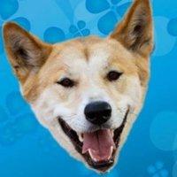 Sue Dingo   Social Profile