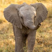 ElephantsDaiIy