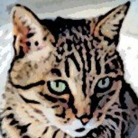 Moira | Social Profile