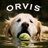 Twitter result for Orvis from OrvisDogs