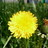 The profile image of dandelion8739