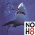 Super Shark Social Profile