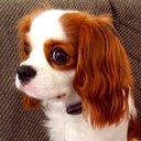 松根マサト@WIXOSS DIVA(A)LIVE【J.C.STAFF】👉2021年1月放映🎉🎀