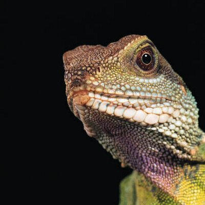 lizard.k | Social Profile