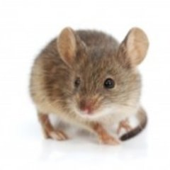 Profile picture of Pest Control Berlin NJ
