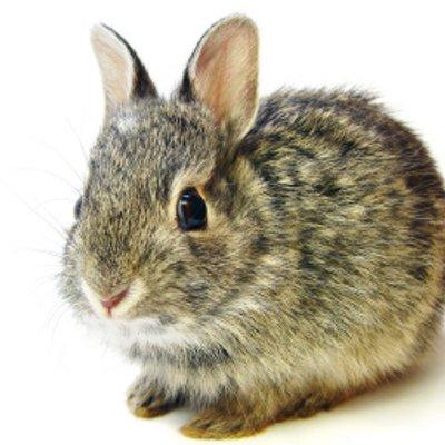 Prancing Rabbit (@PrancingRabbit)