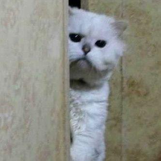 Бой#кот (@JvOFUHo9Zd6fdDw)