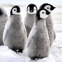 HourlyPinguins
