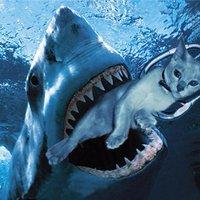 @Sharkb8games
