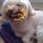 @Chuco_the_dog
