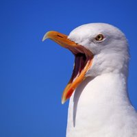 @cmo_seagull