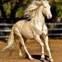 二度見するほど美しい生き物