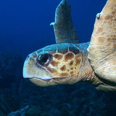 Stop Ocean Pollution | Social Profile