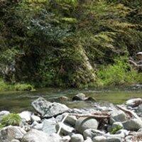 下の溪に居り鱒 | Social Profile