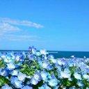 花のBBA