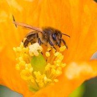 bijenbrigade