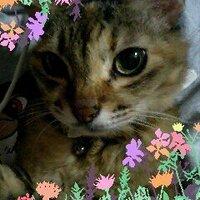 西川洋子 | Social Profile