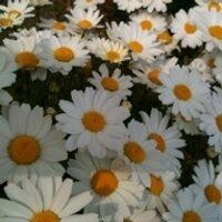 soyama eri | Social Profile