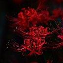 美しき花の世界