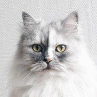 @catfloaf
