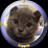 twthumb_cocoa_suzuki