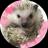 The profile image of tenori_nyanko