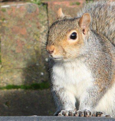 EagerSquirrel