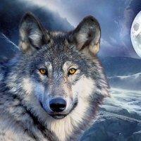 Wolf_Wolrd_Wild