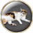 The profile image of DreamofPinkElep