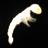 zooplankton1