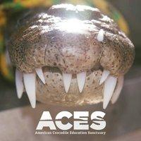 @ACES_crocs