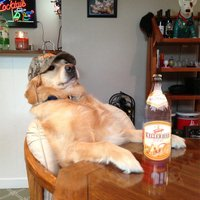 @Hensmanns_Hund